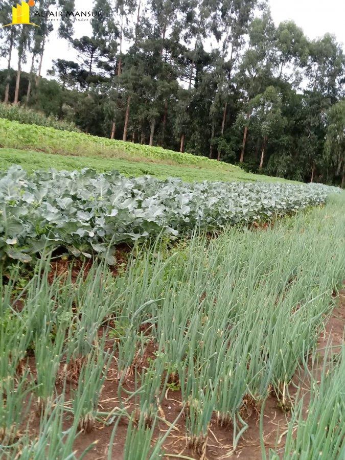 Fazenda/sítio/chácara/haras à venda  no Centro - Quitandinha, PR. Imóveis